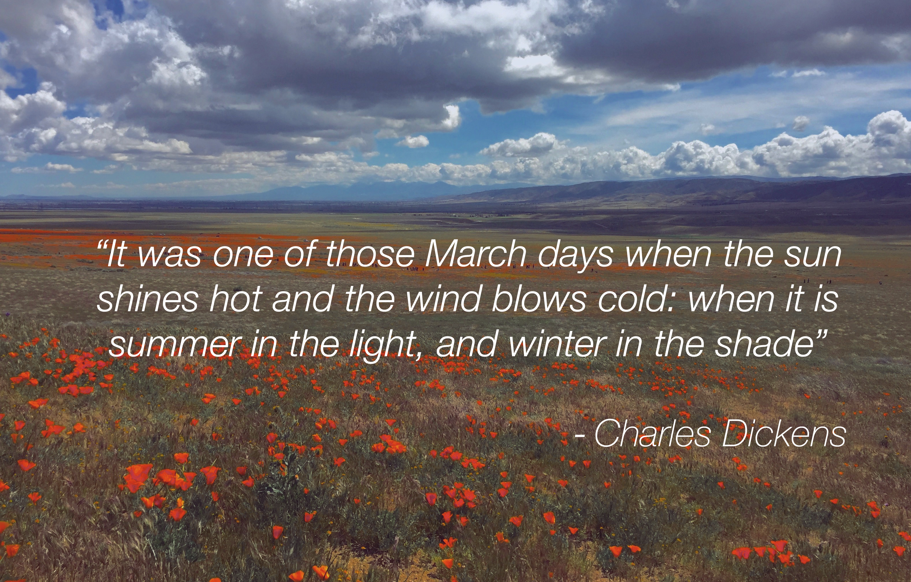 March2017Quote_Poppies