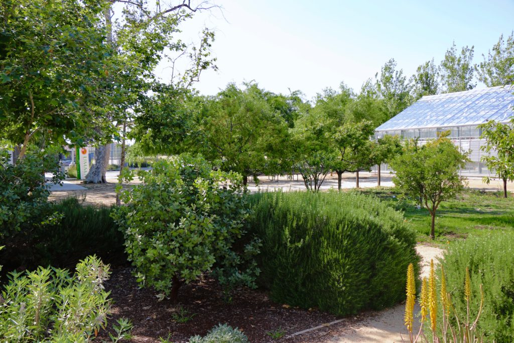 Fremont Wellness Center & Community Garden – UMMA Community Clinic