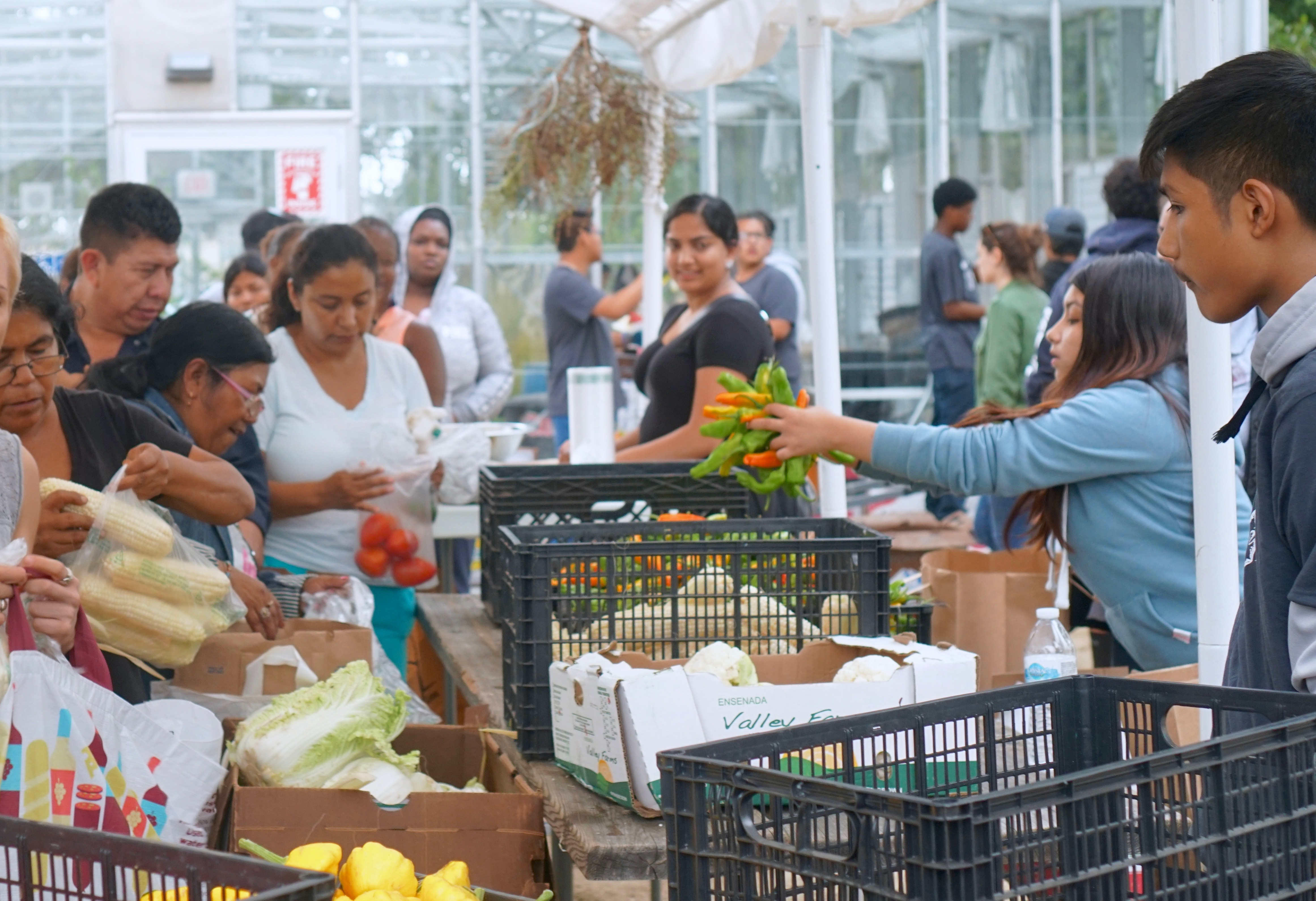 UMMA Clinic, the LA Neighborhood Land Trust, and Food Forward come together along with volunteers from Fremont High School at the Fremont Community Garden to offer free fresh fruit and vegetables to the community every Wednesday afternoon from 3-5pm.